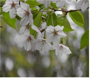 나무꽃2.jpg