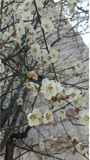 나무꽃1.jpg
