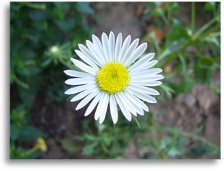 꽃1.jpg