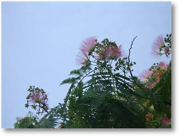 꽃7.jpg
