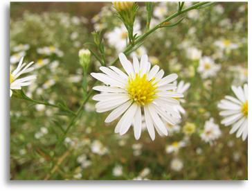 꽃6.jpg